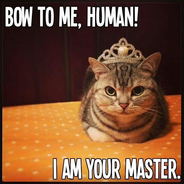 Yes...Master...! | All Things Feline =^..^= | Pinterest