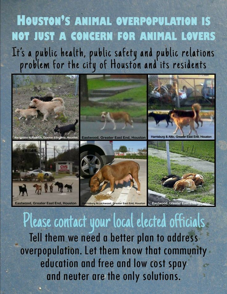 animal overpopulation The literature and statistics on dog and cat overpopulation is copious    and often discouraging but isar isn't discouraged to the contrary, we will continue to work for the day when dog and cat overpopulation is a distant memory—as we have for decades past.