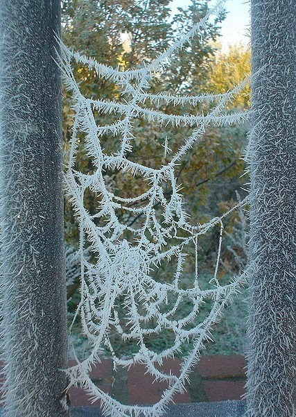 Amazing. I don't like spiders, but I find webs to be amazing.