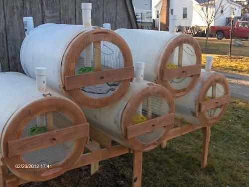 backyard quail production various design