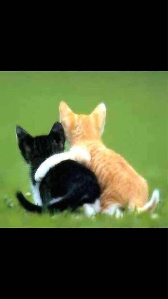 kitten date