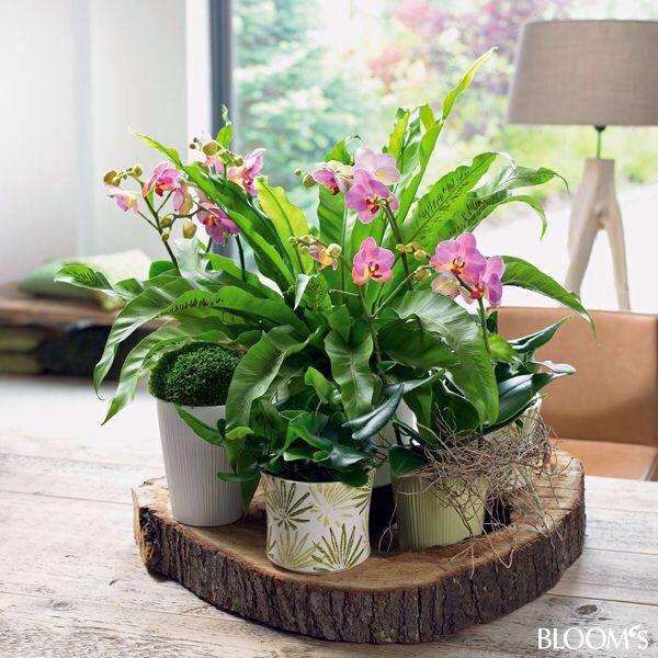 Zimmerpflanzen wohnzimmer for Stylische zimmerpflanzen