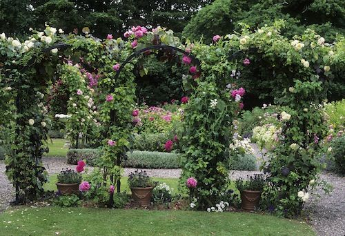 Love the arches with the climbing roses garden ideas for Rose garden design