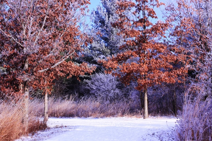 Winter trees | Majestic and Beautiful Trees | Pinterest Pictures Trees In Winter Pinterest
