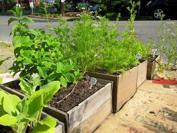 Container Vegetable Gardening Gardening Pinterest
