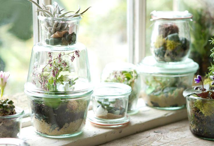 Tiny Terrariums from Terrain