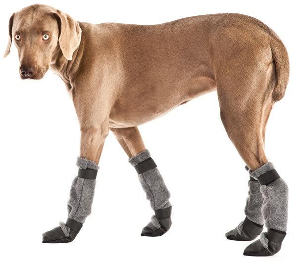 WEIMARANER Dog Booties Dog Days - Doggie Clobber Pinterest