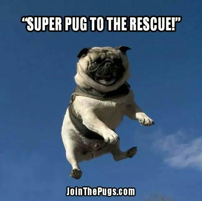 Super Pug | Anything Pugs | Pinterest Pug