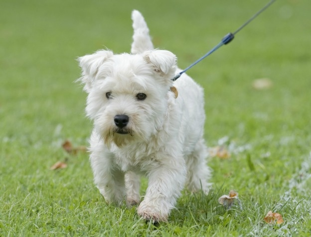 Dog Breeds Alphabetical Orderall Small Dog Breed List A To ...