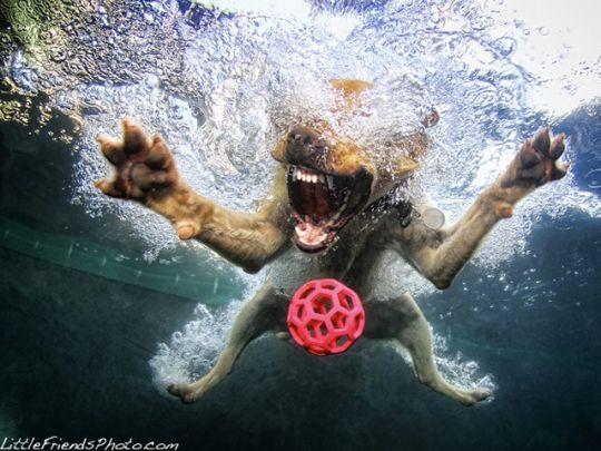 Part of Seth Casteel's 'Dogs Underwater' photo series