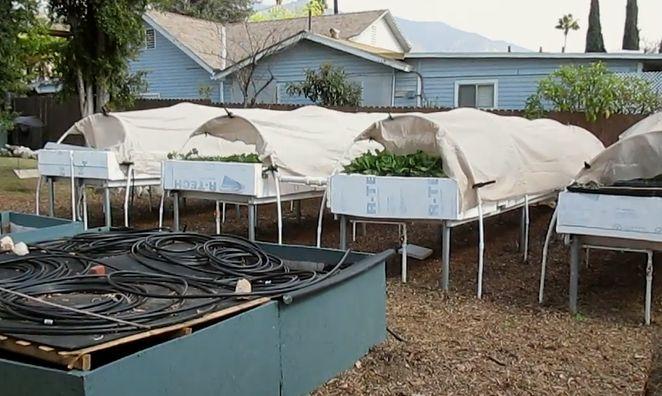 Suburban Backyard Farming : Can you make a living from suburban, backyard aquaponics?