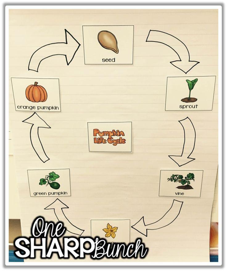 Plant Life Cycle Pumpkins! Lesson Plan Educationcom - satukisinfo