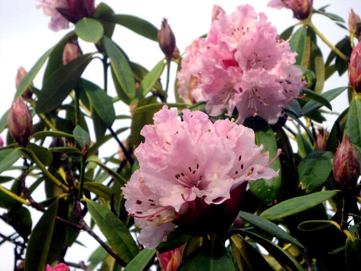 blooming flowers winters tx