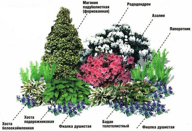 Какие растения лучше сажать в тени 13