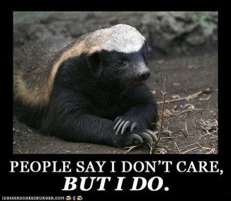 Misunderstood Honey Badger