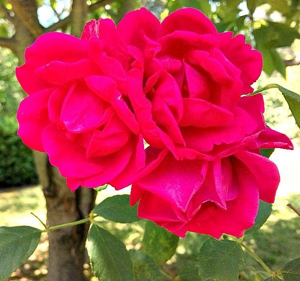 rose of sharon pentecostal church of god kansas city mo