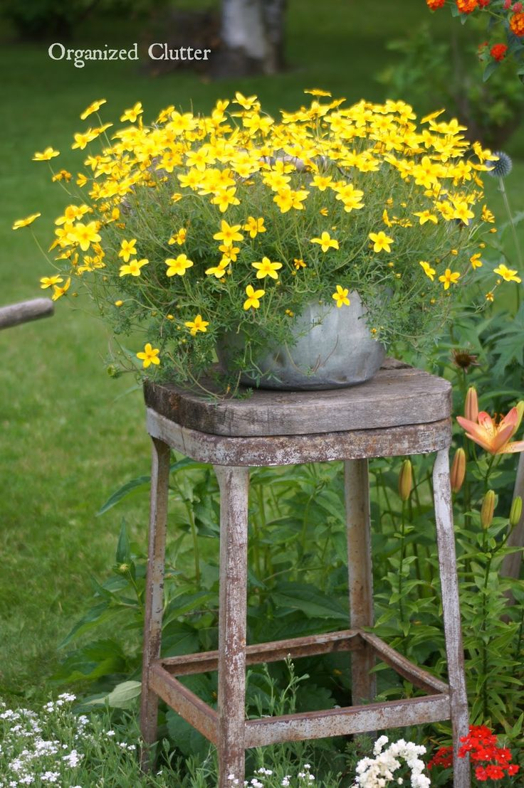 Bidens on a rustic stool containers pinterest - Rustic flower gardens ...