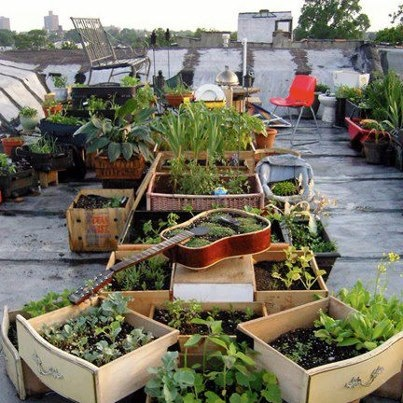 Homesteading self sufficiency survival gardening pinterest