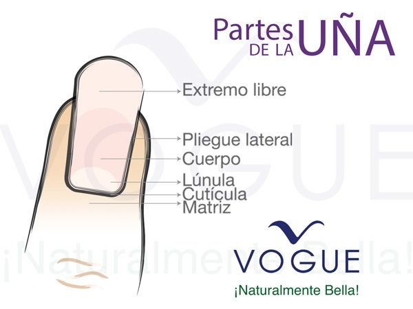 Partes de la u a vogue u as pinterest for Partes de una griferia de ducha