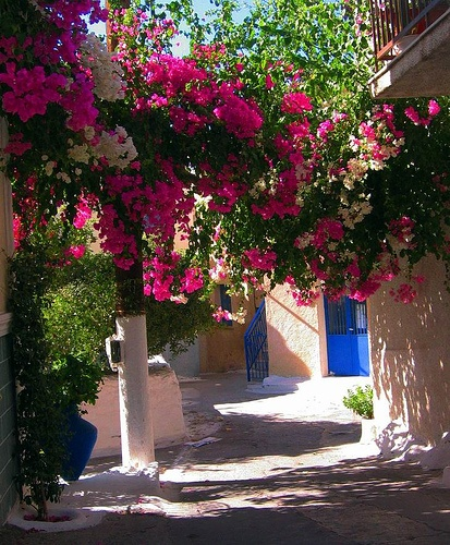 Floral arch on the streets of Poros, Greece
