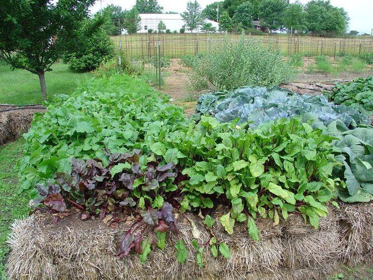 Straw bale gardens Gardening Pinterest