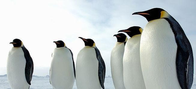 Image Result For Image Result For Penguins