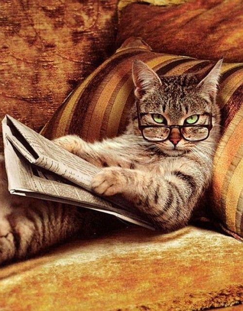 #cat #reading #newspaper #glasses #funny