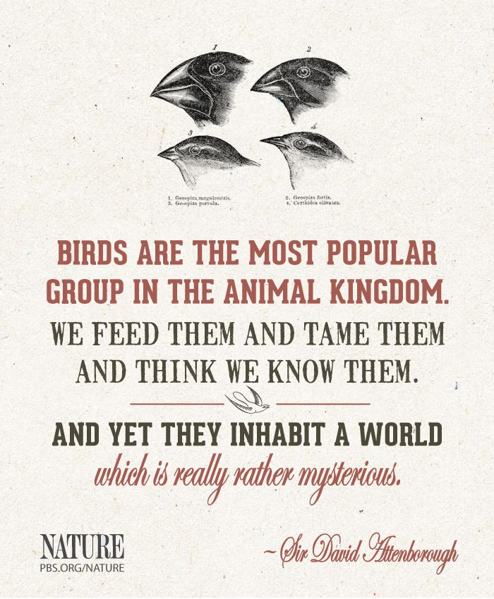 Attenborough quote Conservation Environmental and Animal Awa