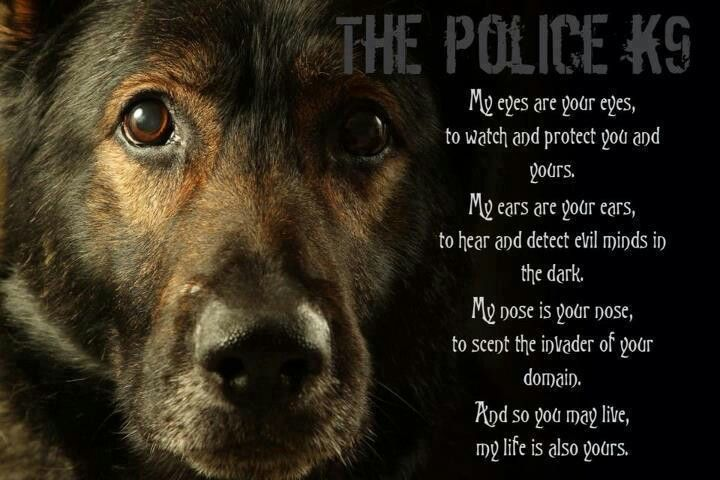 Awesome! Love-K9 poem | Wolf or Dog? | Pinterest