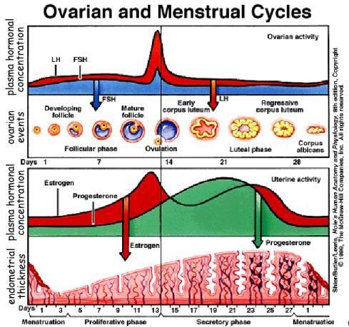Hormones - reproductive cycle | OB | Pinterest