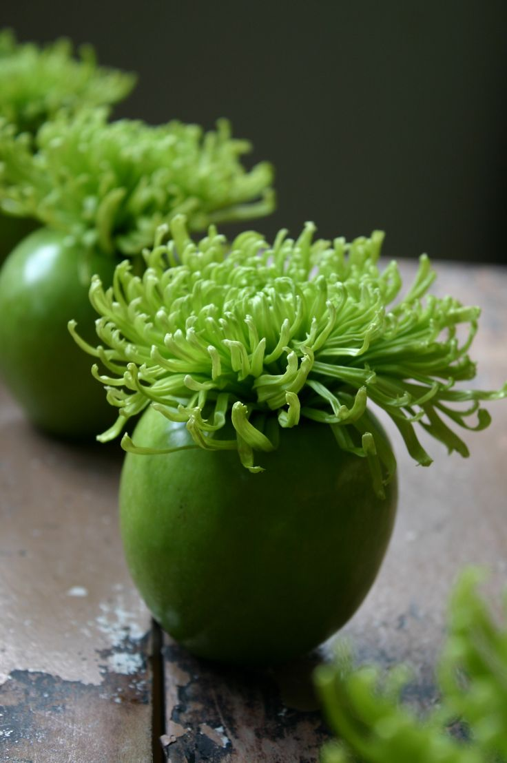 Apple Bombs.Acid green Spider Mums are placed in green apple vases for an explosive centerpiece. Arrangements like this are quick, inexpensive and fresh.