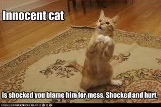 Innocent Cat!