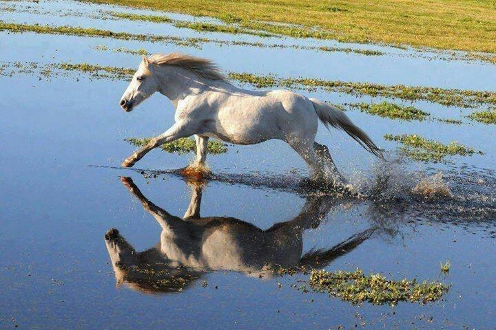 Horse running through water | Panting ideas | Pinterest - photo#16