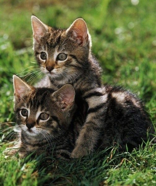 These cats are soo cute cats