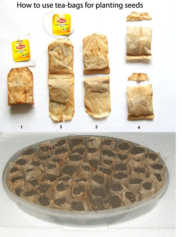 How To Use Tea Bags For Planting Seeds Gardening Tips