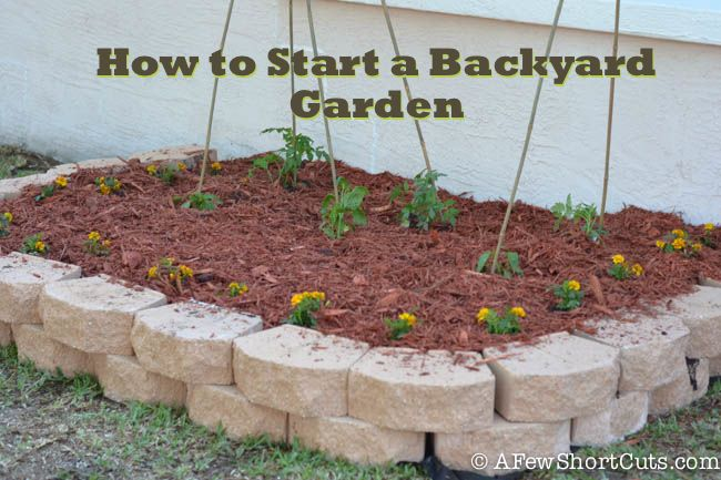 How to Start a Back Yard Garden