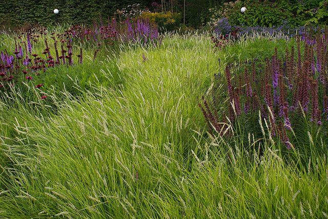 Pin By Takuma On Grasses Pinterest