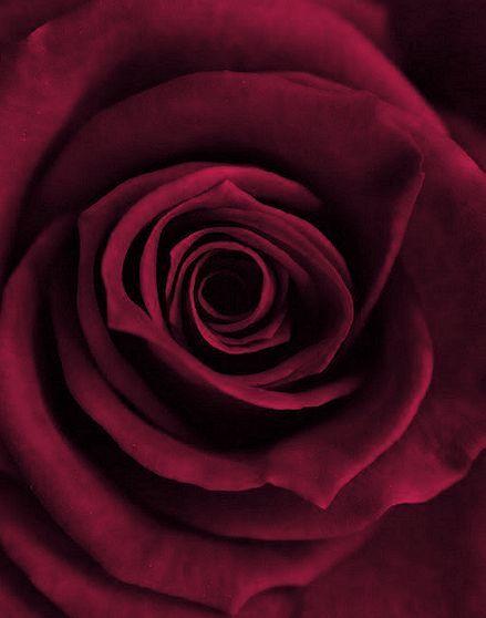 valentine day color representation
