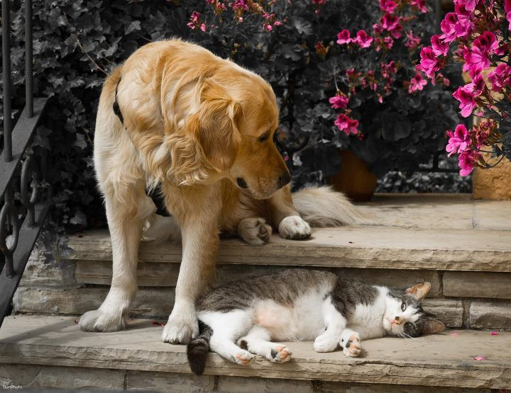 Cat And Dog Pictures Together