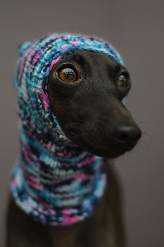 Knitted hats for dogs from