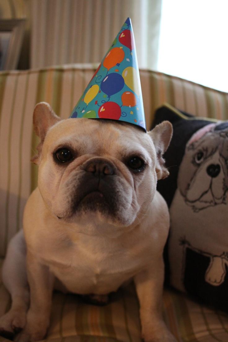 Happy birthday french bulldogs pinterest