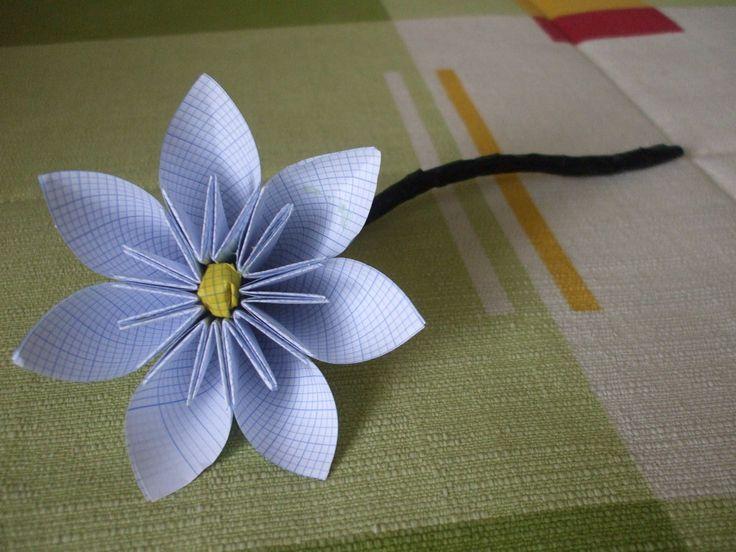 Pin by victoria on cono plantas pinterest - Plantas para hacer setos ...