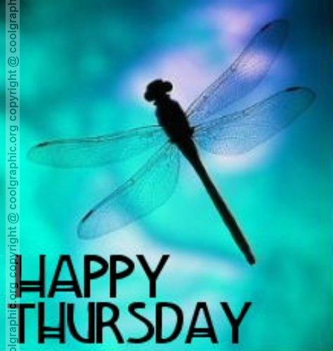 Happy Thursday Funny Sayings | Happy Thursday Graphic For Orkut, Myspace & Facebook Friends ...