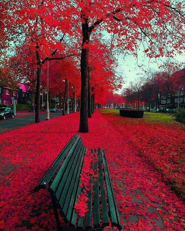 1000 ideias sobre paisagem de outono no pinterest china for Amsterdam casa rosa