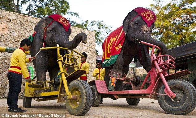 Elephants weren't made for THIS. Click to stop the circus from abusing these majestic animals!