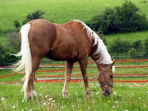 palomino horse color - photo #7