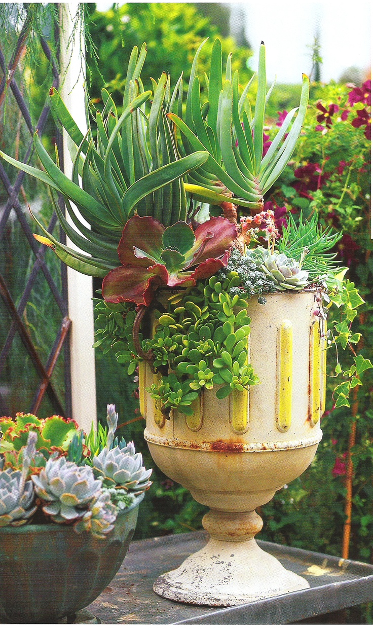 succulents in a footed urn