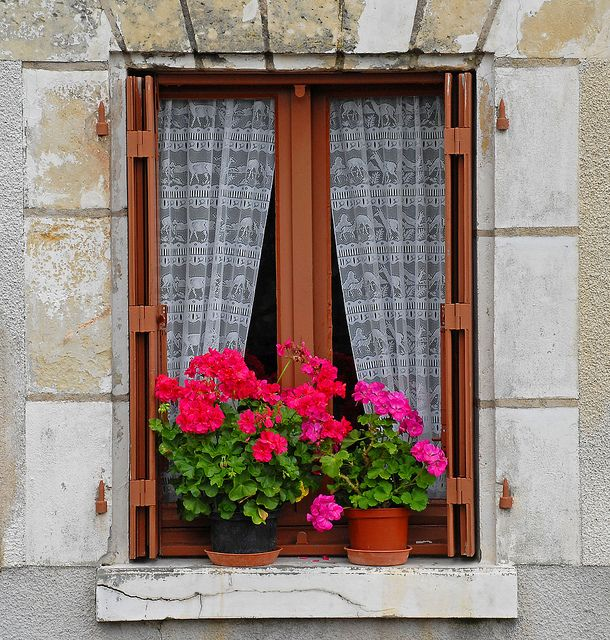 Lace curtains and geraniums