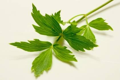 Lovage as a natural salt substitute | Herb and Spice Blend Recipes ...