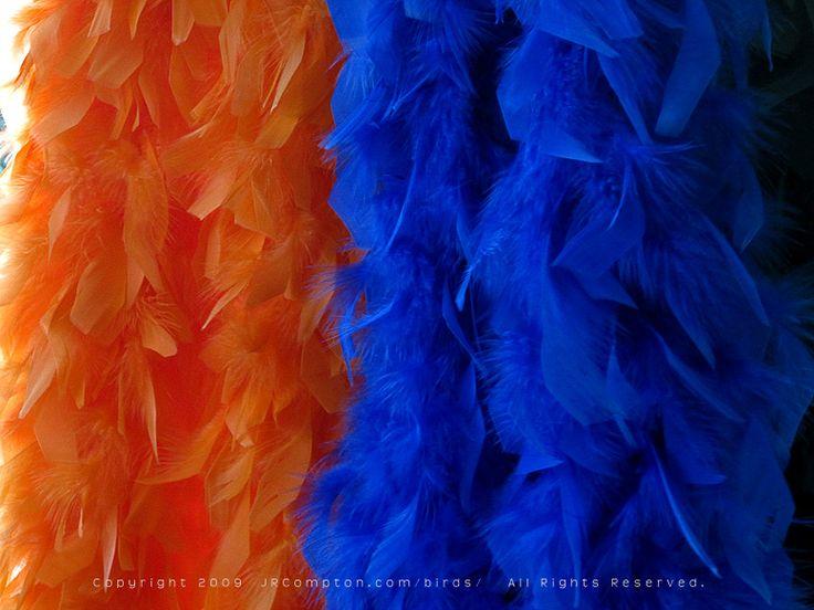 orange-n-blue-boas